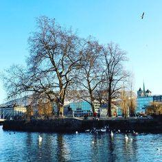 #ilerousseau #rousseau #rhone #cathedral #geneva #geneve #genève #trees #winter #swans