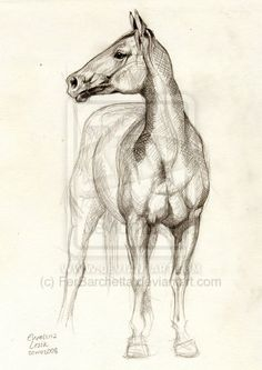 Horse Study 2. by ~FerBarchetta on deviantART