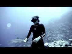 8 Times Humans Interacted With Sharks and Something Beautiful Happened | One Green Planet This video is incredible.
