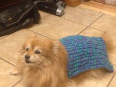 Dog blanket DIY! Made scarf. Ran out of thread and gave it to the dog ( literally ) but I must say #Tasha #dogBlanket