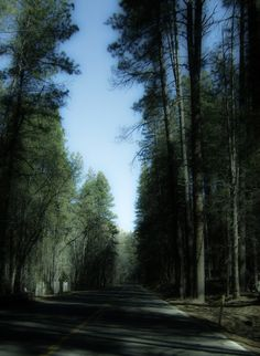 Kaibab National Forest in Arizona. Photo by Holly Tierney-Bedord.