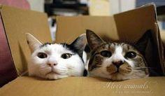 Что такое красота? - Это дом, где два кота.  Что такое теснота? - Это дом, где три кота.  Что такое пустота? - Дом, где был - и нет кота...