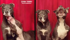 Photo booth doggie snapshots.  While in the photo booth, the dogs acted unsurprisingly human...