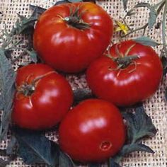 Brandywine Tomato Seeds...heirloom.  Nothing can compare to the taste of this heirloom! You always get big, meaty tomatoes without a lot of gel and seeds! One taste and you will never grow a hybrid again! These do take a little longer after transplanting, so I start my seeds in February, then set them out in April inside my wall-o-waters. By the end of June, I am enjoying these delicious tomatoes on BLTs, salads, etc.