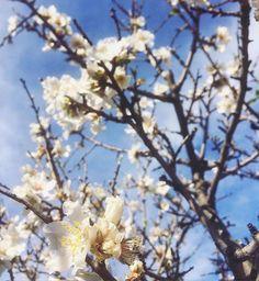 by http://ift.tt/1OJSkeg - Sardegna turismo by italylandscape.com #traveloffers #holiday   Voglio fare con te ciò che la primavera fa coi ciliegi dice Pablo Neruda... Anch'io! Anche se questi sono mandorli  #primavera #igersitalia #igersardegna #lanuovasardegna #cagliariturismo #cagliari #cagliarigram #igerscagliari #inguaribileromantica Foto presente anche su http://ift.tt/1tOf9XD   February 21 2016 at 11:59AM (ph eledeidda )   #traveloffers #holiday   INSERISCI ANCHE TU offerte di turismo…