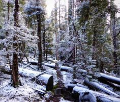 Winter wonderland this week on the Overland Track in the Cradle Mountain Lake St Clair National Park. The Overland is becoming more and more popular over winter and with vistas like this it's easy to see why. Image sent in by Dan on IG: https://instagram.com/p/BHJ50TJAU0T/