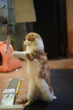 waffles the cat - Google Search