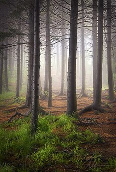 ✯ Blue Ridge Fog