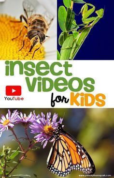 Insects Videos For Kids Insects Kindergarten Insects Activities Kid Science, 1st Grade Science, Science Videos, Kindergarten Science, Teaching Science, Teaching Themes, Insect Activities, Science Activities, Activities For Kids