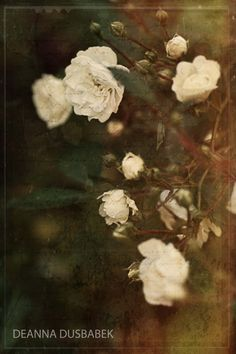 Florals and dreamy romantic and poetic images.