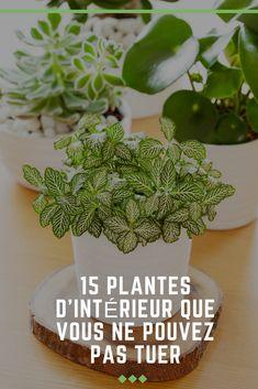 15 plantes d'intérieur que vous ne pouvez pas tuer