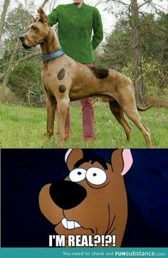 Scooby doo is real? - FunSubstance.com
