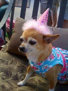 Pet Magnet scandical My Dog Loves Savannah