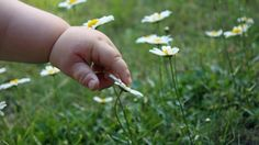 Choosing Safe Herbs For Kids: Learn about how to choose and use safe herbs with children.
