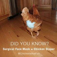 chicken diaper from surgical face mask