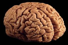 Siete cosas que deberías saber sobre tu cerebro