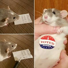 Momma, i voted today!