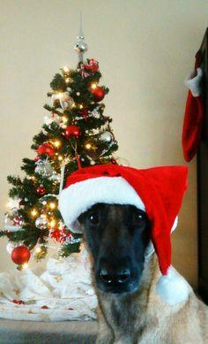 """keanetje vertelt: De """"dure"""" kerstdagen."""