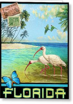 Vintage Florida Travel Poster With Ibis Art Print by R christopher Vest. All prints are professionally printed, packaged, and shipped within 3 - 4 business days. Choose from multiple sizes and hundreds of frame and mat options. Thing 1, World Photography, Photography Tips, Travel Photography, Vintage Florida, Tropical Art, Florida Travel, Vintage Travel Posters, Stretched Canvas Prints