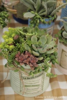 succulent - recycle cans