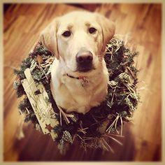 Dog in a wreath -- cute dog Christmas card photo
