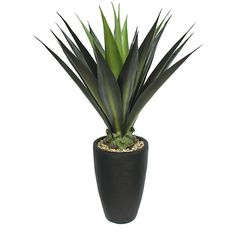 Laura Ashley 44 Inch Realistic Silk Giant Aloe Plant with Contemporary Planter - Overstock™ Shopping - Great Deals on Laura Ashley Silk Plants Small Artificial Plants, Fake Plants, Types Of Plants, Artificial Flowers, Contemporary Planters, Agave Plant, Floor Plants, Plant Box, Silk Plants