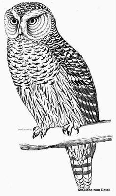 so nice (: Foto Transfer Potch, Parrot Image, Penguin Images, Halloween Fonts, Wood Burning Patterns, Digital Scrapbook Paper, Owl Art, Digi Stamps, Coloring Book Pages