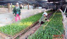 Nghệ An trồng thêm được 9.780 ha rừng   TIN LIÊN QUAN Hỗ trợ 19 tỷ đồng giống cây trồng rừng nguyên liệu Khi người dân trồng rừng để thoát nghèo bền vững Rộng cơ hội cho nghề trồng rừng ở miền Tây Chuẩn bị trên 11 triệu cây giống trồng rừng vụ xuân hè  (Baonghean.vn)  Diện tích rừng trồng mới tập trung 8 tháng đầu năm trên địa bàn Nghệ An ước đạt 9.780 ha tăng 161% so với cùng kỳ năm 2015.  Khu vực vườn ươm keo lai của Ban quản lý rừng phòng hộ Yên Thành  Theo báo cáo của ngành nông nghiệp…