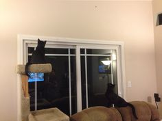 "How to tell there's a spider on the wall. My ""watch cats"" Deacon and Tilly"