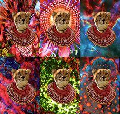 Cheetah Collage