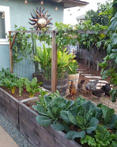 The 20 best vegetable garden design ideas for a green life Having a vegetable patch is ideal for a green life, especially if you live in the city. There are many vegetable garden design ideas for v. Home Vegetable Garden Design, Veg Garden, Edible Garden, Garden Beds, Home Garden Design, Vegetable Gardening, Organic Gardening, Chicken Garden, Easy Garden