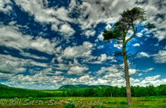 Lone Tree Lone Tree, Light Of Life, Clouds, Photography, Outdoor, Outdoors, Photograph, Fotografie, Photoshoot