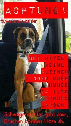 A C H T U N G ! ! ! Bei Hitze keine kleinen Kinder  oder Hunde im Auto zurück lassen. Schwiegermütter geht aber, Drachen können Hitze ab.  Share (y) © FB.wau.wau.rudeltier