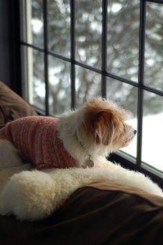 watching my human shovel snow