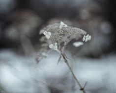 winterland on Behance - Amy Buxton