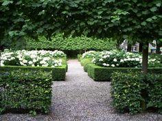 Bichsbaumhecken und weiße Hortensien