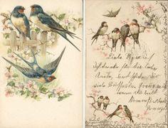 leuk met vogels