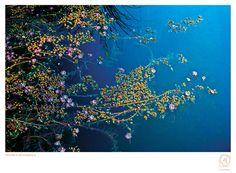 poster águas • fotos valéria mendonça • projeto gráfico selvvva