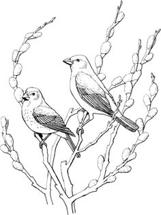 Click To See Printable Version Of Two Cowbirds Coloring Page