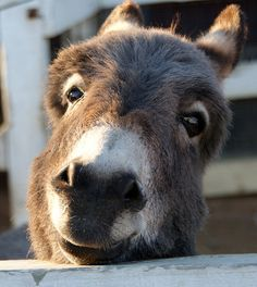 Donkey smile.... by paul m. floyd, via Flickr  so cute.