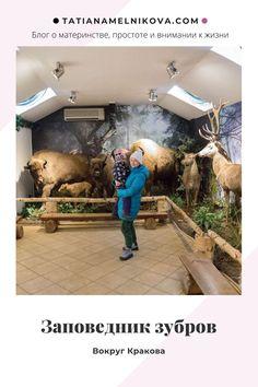 Выходной день в Пщине. Что посмотреть недалеко от Кракова с детьми. Замок, парк, заповедник зубров Aquarium, Goldfish Bowl, Aquarium Fish Tank, Aquarius, Fish Tank