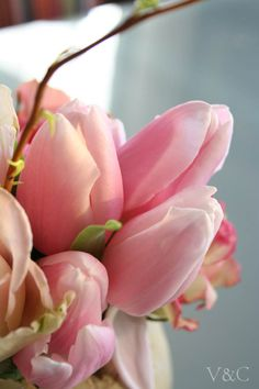 tulipanes rosa.pink tulips