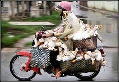 Live Transport