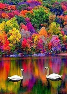 Mother Nature is Awesome! Mother Nature is Awesome! Mother Nature is Awesome! Beautiful World, Beautiful Images, Beautiful Swan, Beautiful Birds, Simply Beautiful, Absolutely Stunning, Belle Photo, Amazing Nature, Pretty Pictures