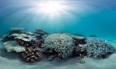 Coral bleaching in the Maldives during May 2016, captured by the XL Catlin Seaview Survey.