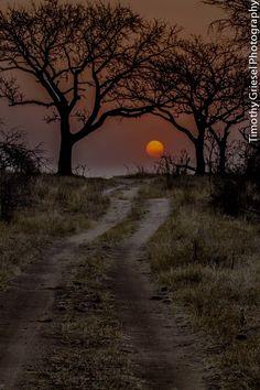 Road to the sun, Kruger National Park, South Africa |  Timothy Griesel on 500px