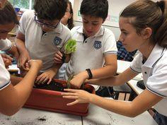 Aprendiendo las características de las plantas en 6º de Primaria.