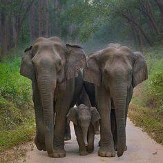herd of elephants - Elefanten - Adorable Animals Elephant Family, Elephant Love, Elephant Art, Asian Elephant, Elephant Drawings, Happy Elephant, Wild Elephant, Elephant Gifts, Elephant Pictures