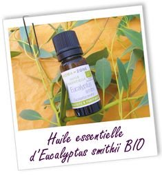 Très douce, cette huile est préférée aux autres eucalyptus comme expectorant ou antiseptique naturel pour les enfants, idéale en cas de rhumes, sinusites et bronchites. Diffusez-la pour mieux respirer !