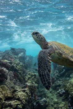 misguided ramblings and rants - captvinvanity: Turtle | Photographer | CV